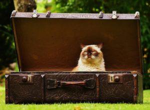 koditon kissa