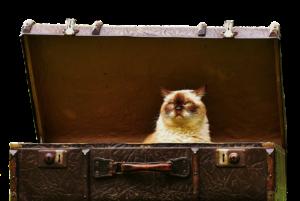 koditon-kissa
