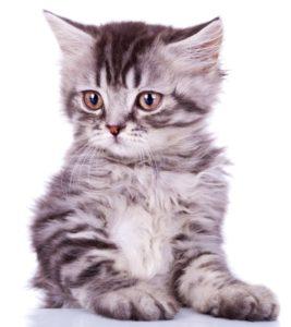kissanruoka