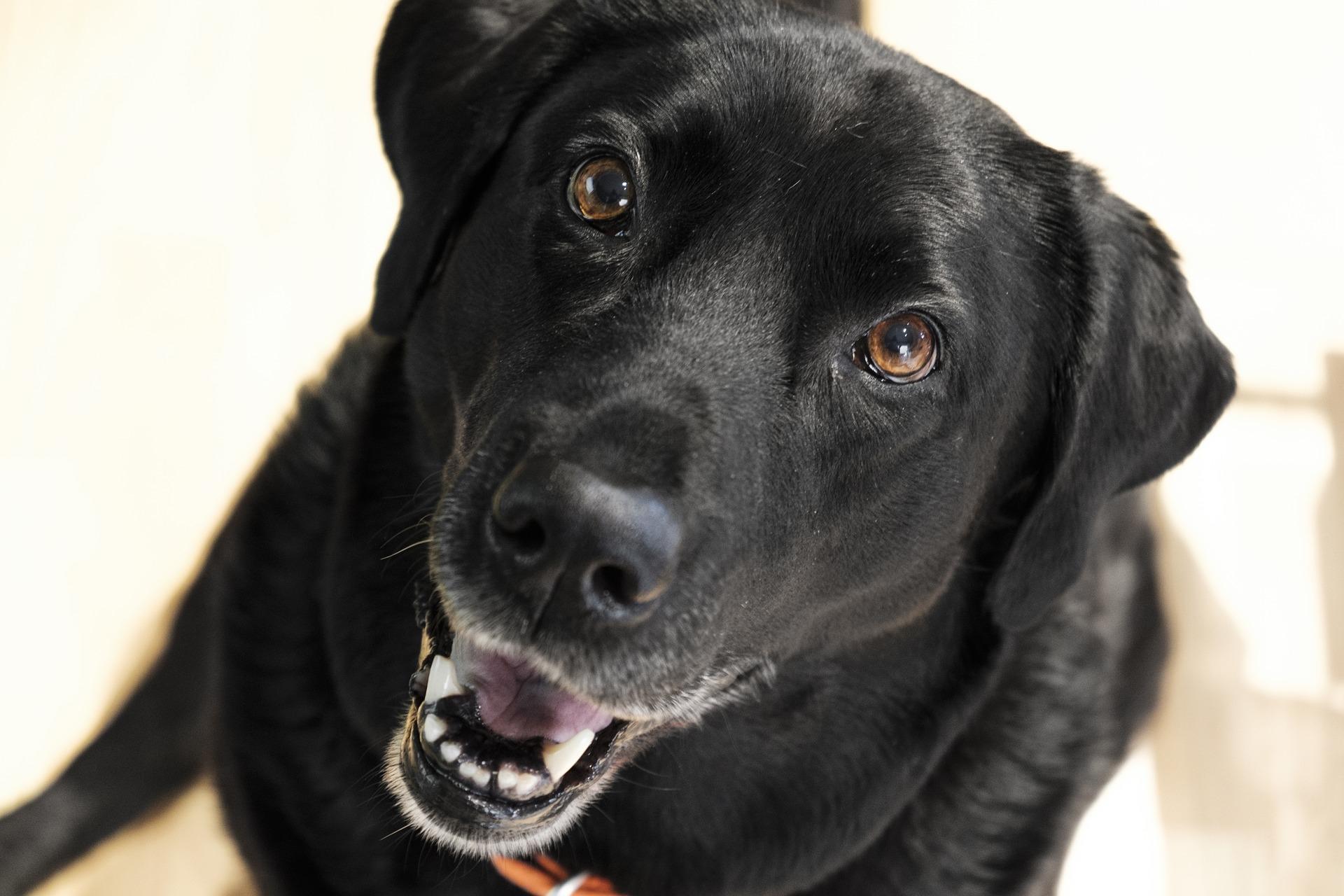 koiran eroahdistus