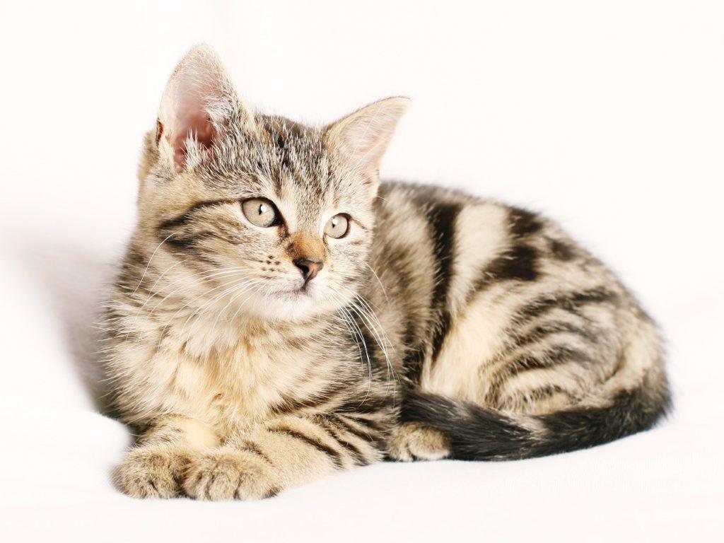 Lyder kissanruoka